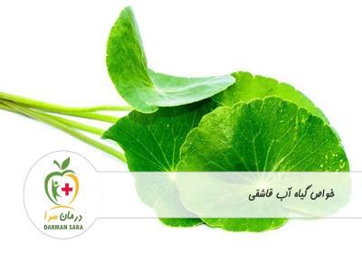 خواص گیاه آب قاشقی چیست